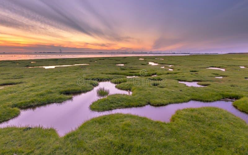Land reclamation in mud flats on Dollard coast. Land reclamation in the tidal marsh mud flats of the Punt van Reide in the Wadden sea area on the Groningen coast royalty free stock image