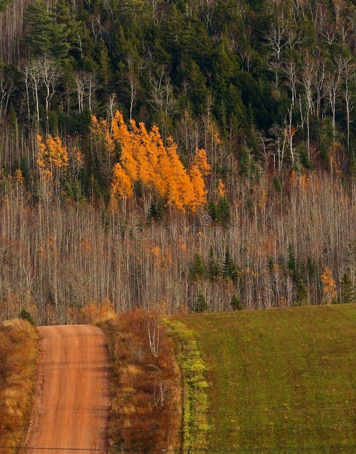 Land-Schotterweg-Fall färbt Hügel stockbild
