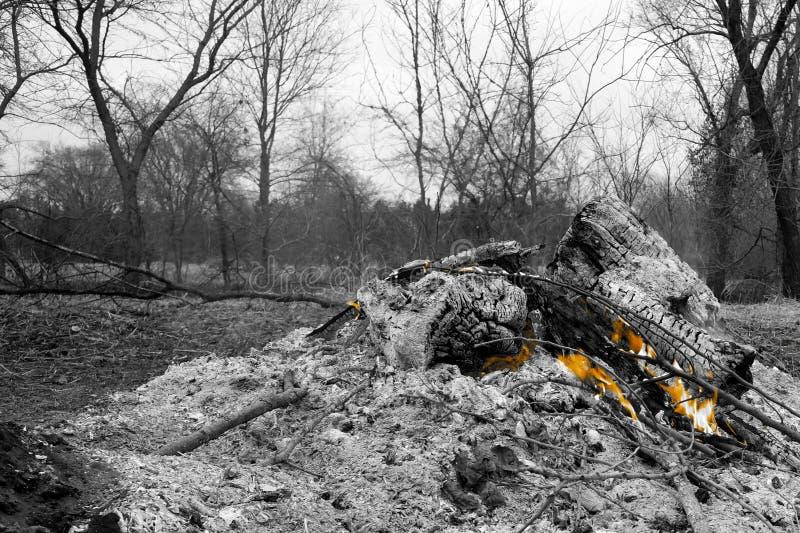 Land som göras klar, genom att ställa in brand till borsten royaltyfri bild