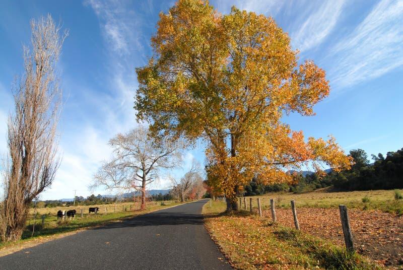 Download Land-Straße im Herbst stockbild. Bild von bunt, laubwechselnd - 865033