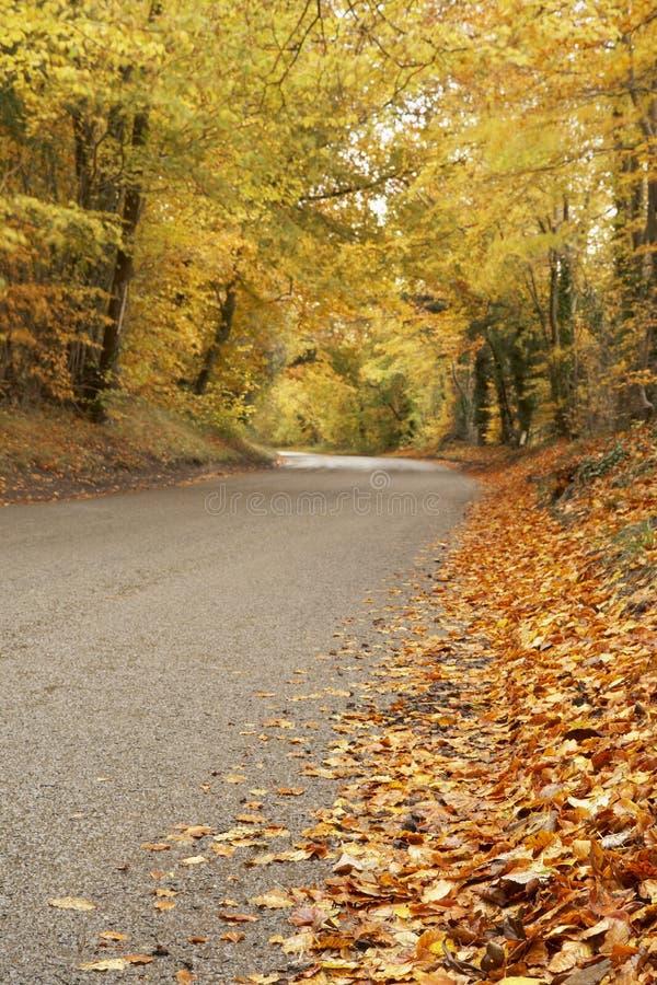 Land-Straße im Herbst lizenzfreies stockfoto