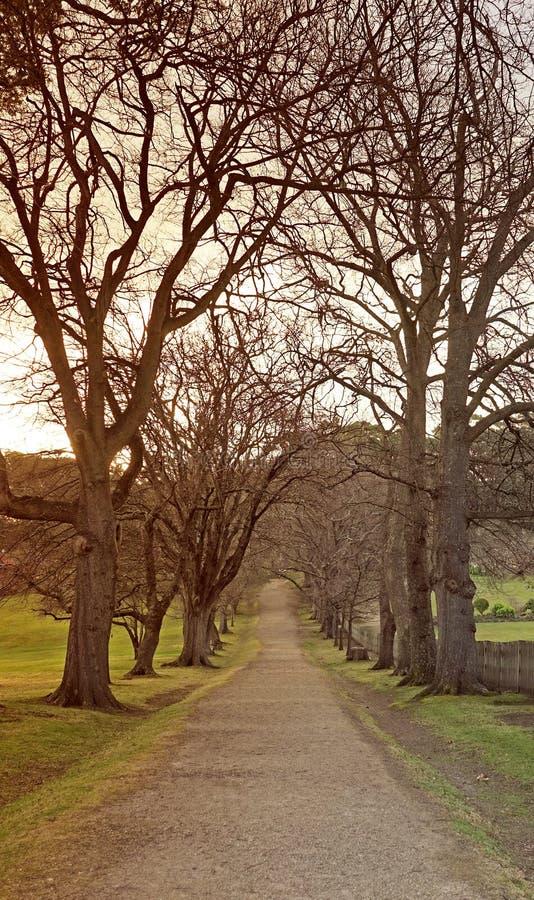 Land-Straße mit unfruchtbaren Bäumen auf beiden Seiten lizenzfreie stockfotos