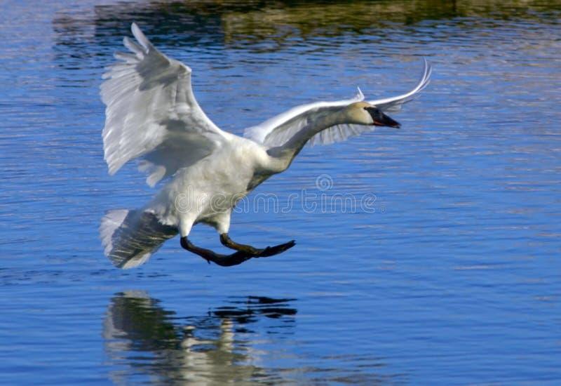 Download Land till arkivfoto. Bild av natur, djurliv, floder, flyg - 521360