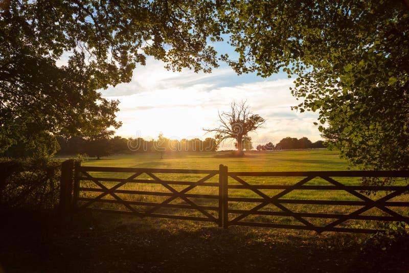 Land-Tor und Bäume in der englischen Landschaft beim Sonnenuntergang oder bei Sunri stockbild
