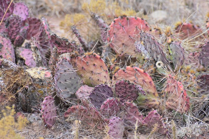 Land van de cactusnew mexico van New Mexico het rode stock afbeelding