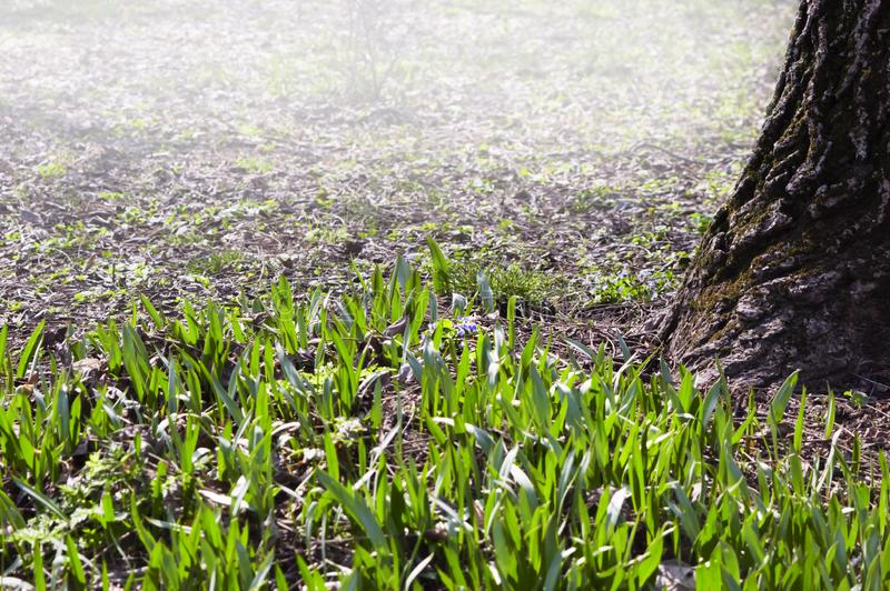 Land wakes up after cold winter. In early spring royalty free stock image