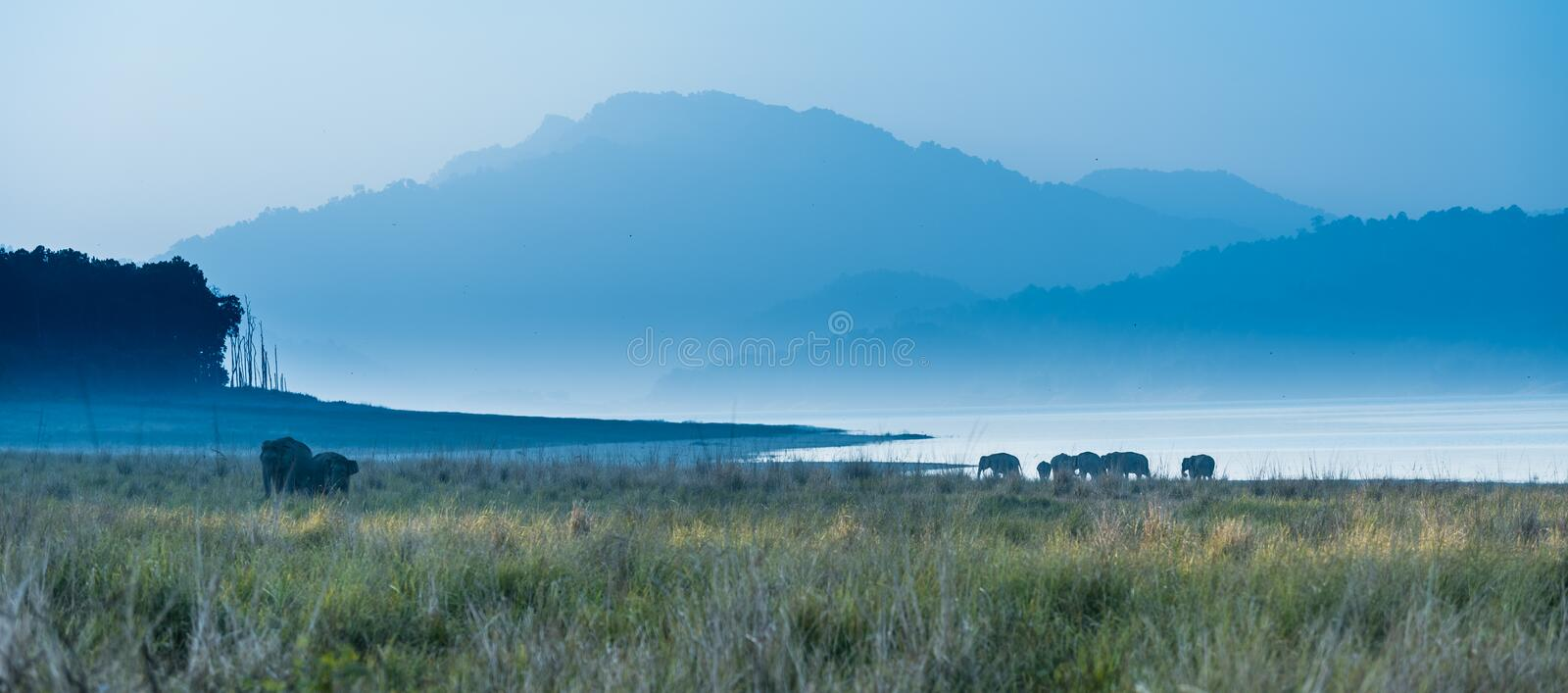 Land of Elephants at Jim Corbett stock image