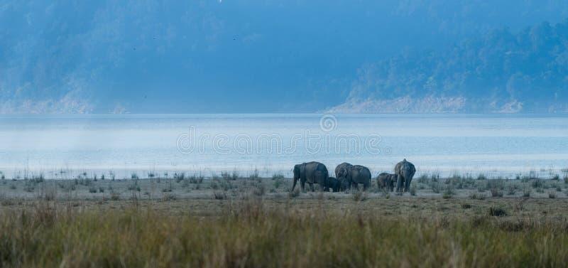 Land of Elephants at Jim Corbett. Land of wild elephants at grasslands of Jim corbett national park stock images