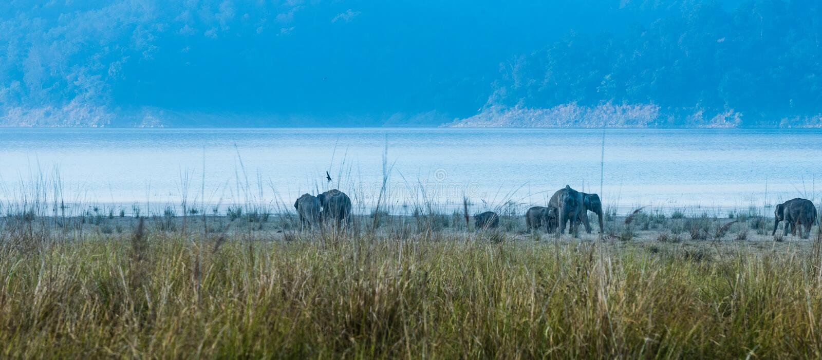 Land of Elephants at Jim Corbett stock photos
