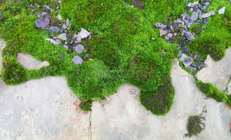 Landa i mossa, stenar och stycken av asfalt, bakgrund royaltyfria bilder