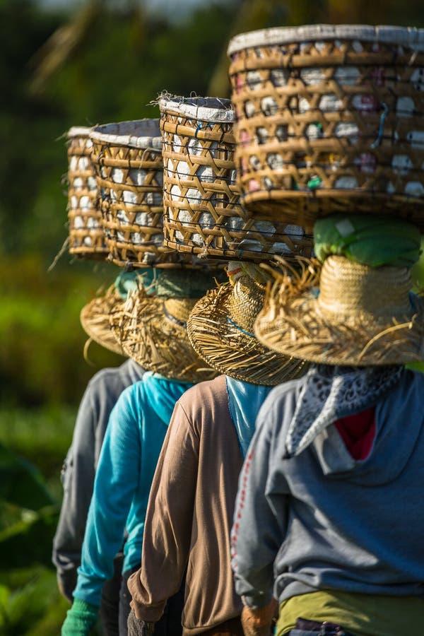 Landarbeiter in balancierenden Körben Asiens stockbilder