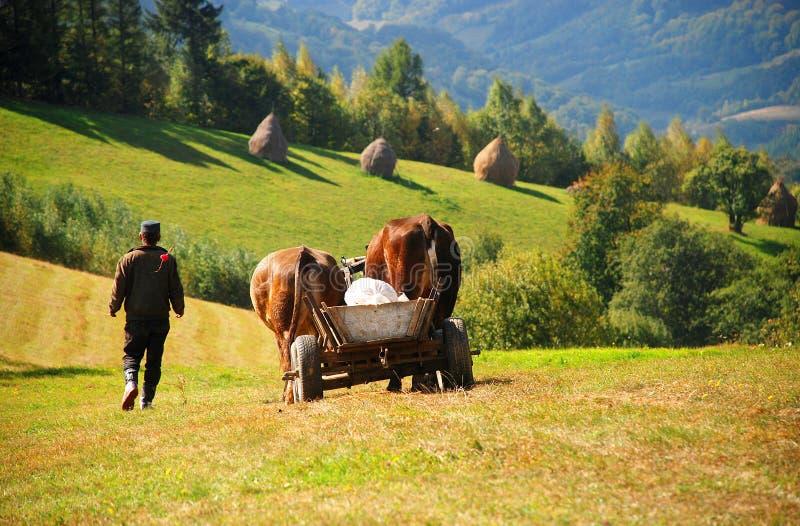 Landarbeiter mit einem Rind-angetriebenen Wagen stockbilder