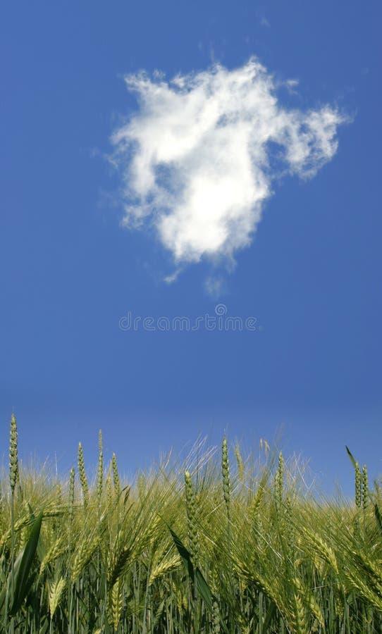 Landbouw stock afbeeldingen