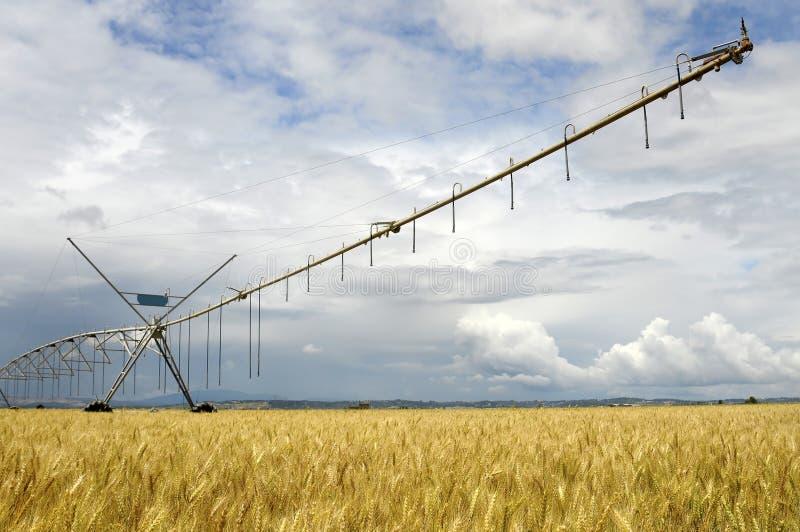 Landbouw stock afbeelding