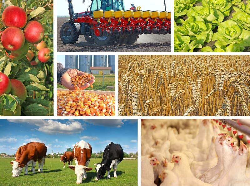 Landbouw - collage stock fotografie