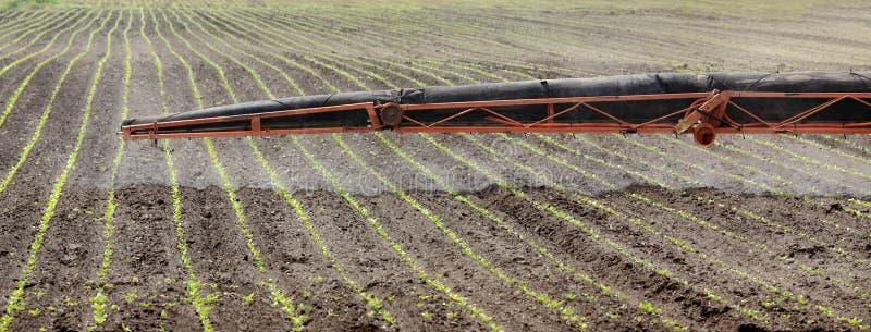 Landbouw, gebied het bespuiten royalty-vrije stock afbeelding