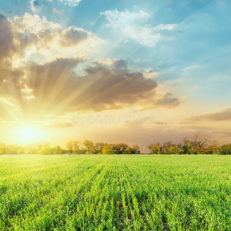 landbouw groen gebied en lage dramatische wolken in zonsondergang stock afbeelding