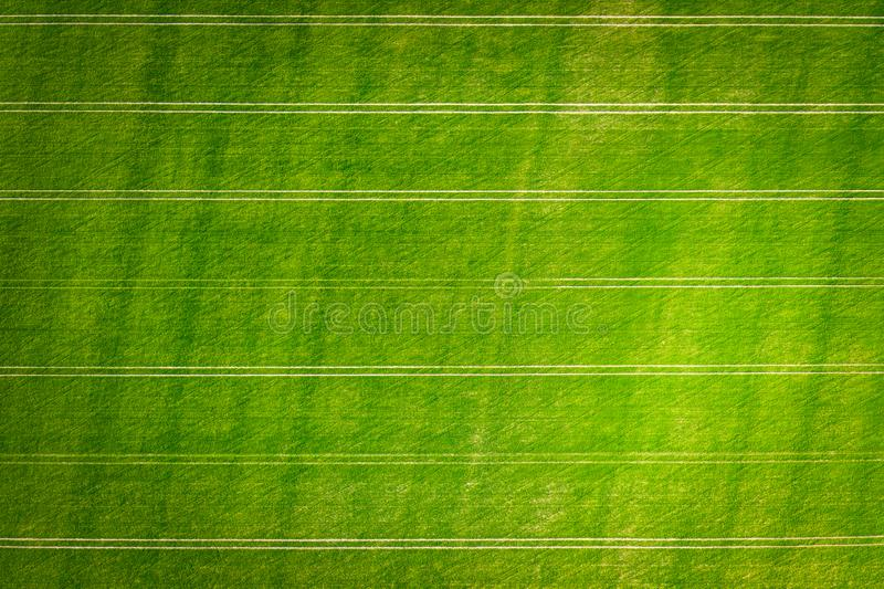 Landbouw Groen gebied van tarwe van hierboven Landbouwachtergrond stock fotografie