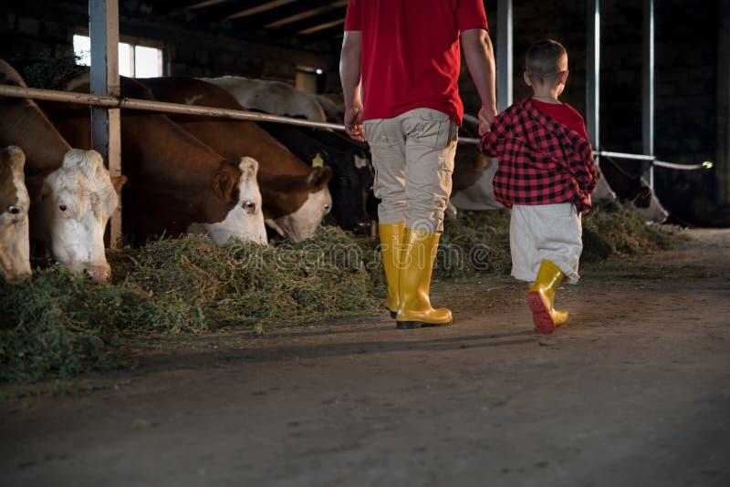 Landbouw, mensen en het concept vee - een mens of een landbouwer met zijn zoon die langs de koeiestal en de koeien op zuivelfa lo stock afbeelding