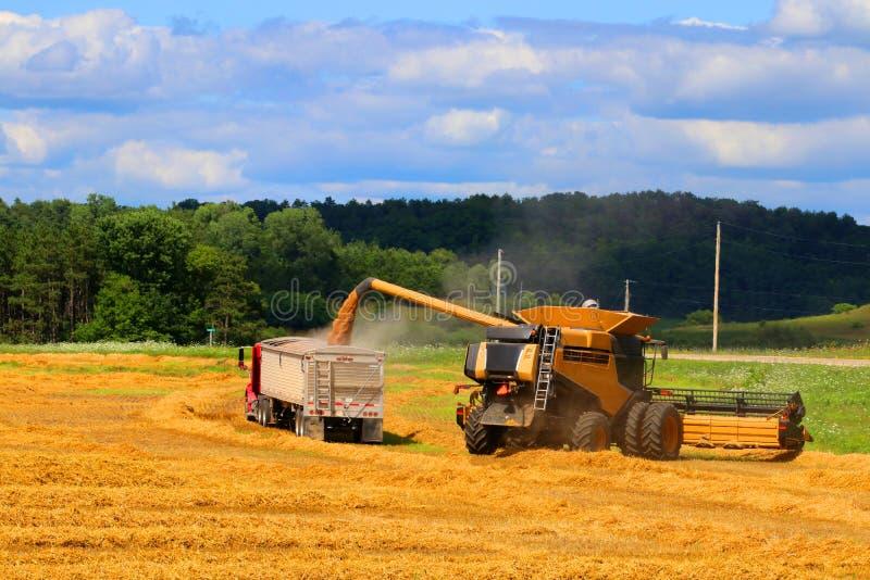 Landbouwachtergrond en het landelijke leven bij de zomerconcept royalty-vrije stock fotografie