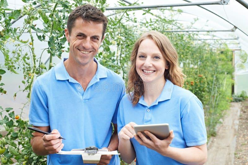 Landbouwarbeiders die Tomatenplanten controleren die Digitale Tablet gebruiken stock fotografie