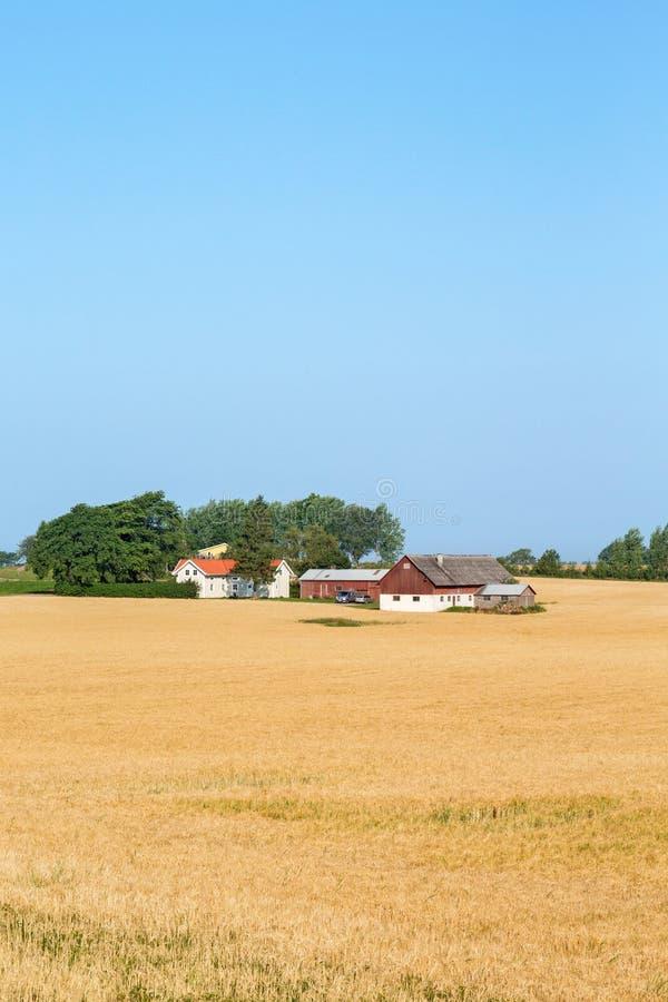 Landbouwbedrijf in cornfield stock afbeelding