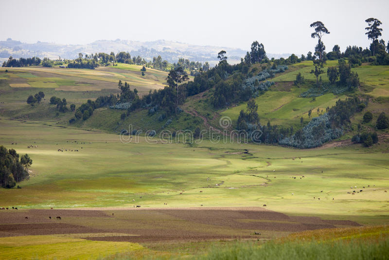 Landbouwbedrijf in de bergen van Ethiopië stock foto's
