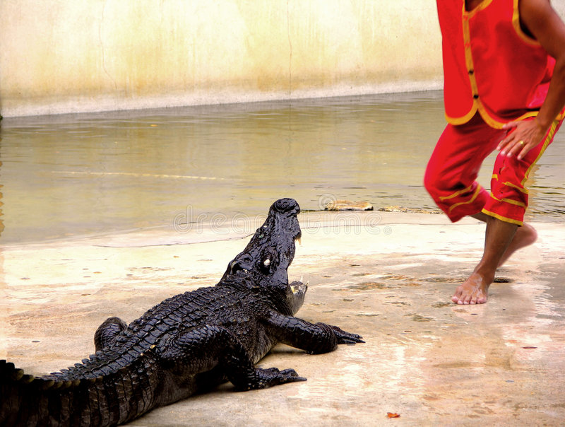 Landbouwbedrijf en Dierentuin 1 van de Krokodil van Samutprakan stock afbeeldingen