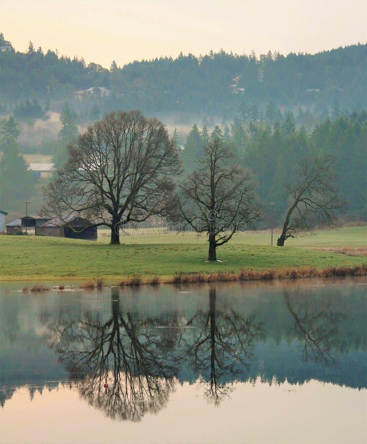 Landbouwbedrijf en eiken boombezinningen stock foto's