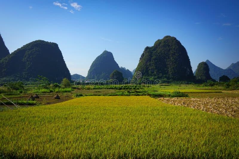 Landbouwbedrijf en ingediend van rijst in Yangshou, China stock foto's