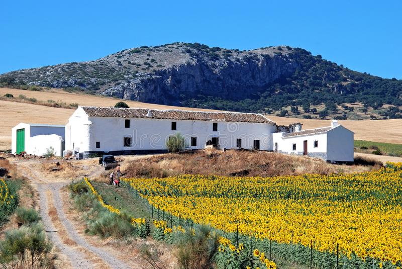 Landbouwbedrijf en zonnebloemgebied, Andalusia, Spanje. royalty-vrije stock afbeeldingen