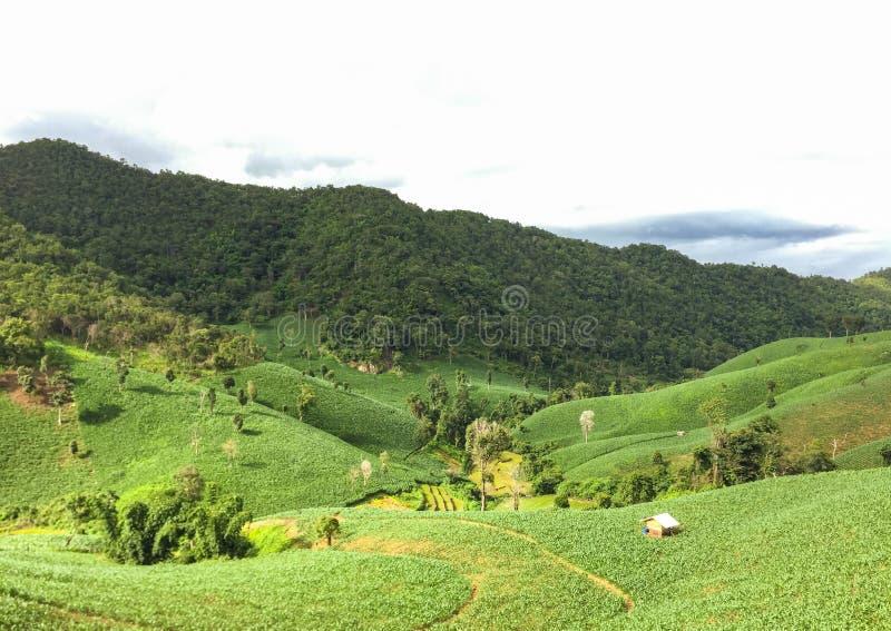 Landbouwbedrijf in het noorden van Thailand stock afbeeldingen