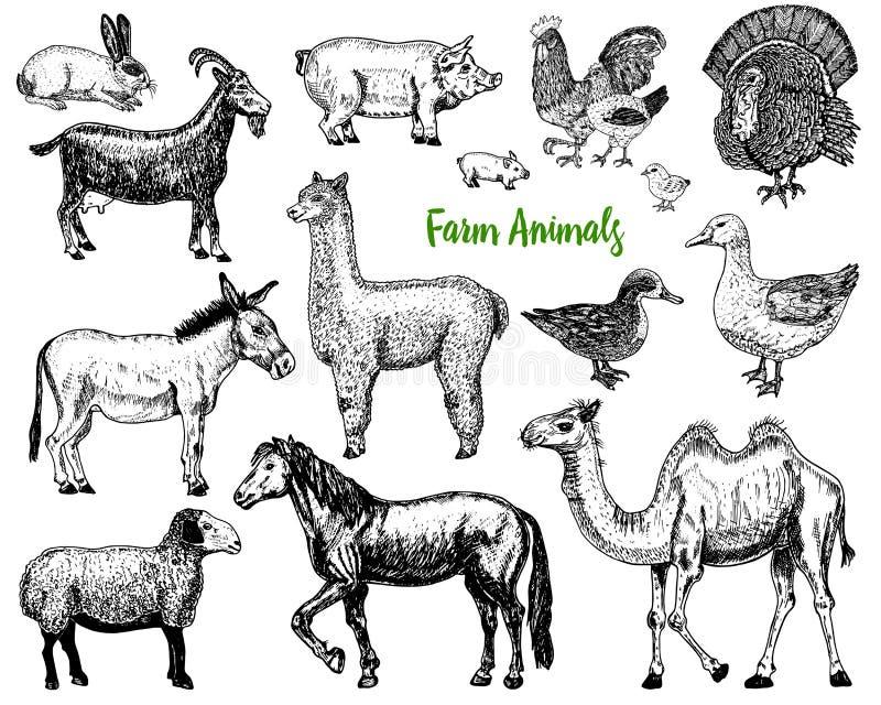 Landbouwbedrijf Leuke Dierlijke grote reeks Vector illustratie Kameel, paard, geit, varken, ezel, bergschapen, lama of alpaca, Tu stock illustratie