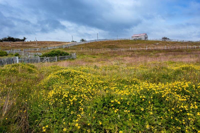 Landbouwbedrijf met piketomheining onder stormachtige hemel Gele madeliefjes shakin stock afbeelding