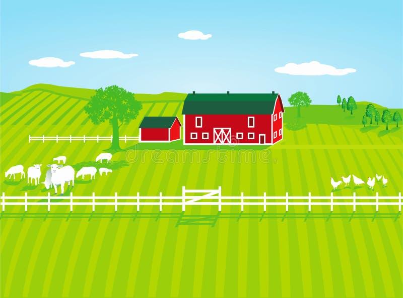 Landbouwbedrijf met Schapen stock foto's