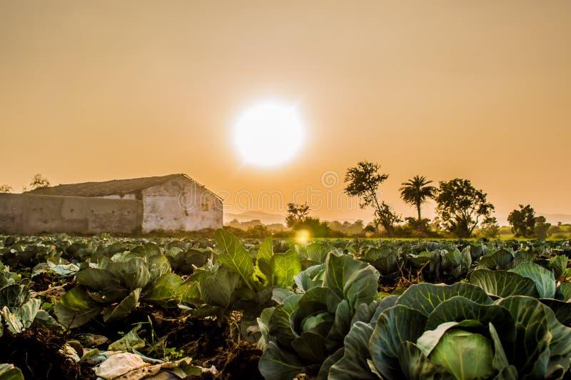 Landbouwbedrijf met Zon en Schuur royalty-vrije stock afbeeldingen