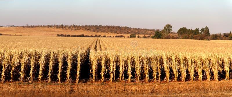 Landbouwbedrijf in Potchefstroom, Zuid-Afrika royalty-vrije stock afbeelding