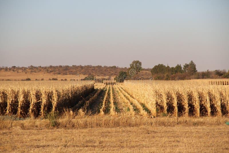 Landbouwbedrijf in Potchefstroom, Zuid-Afrika royalty-vrije stock afbeeldingen