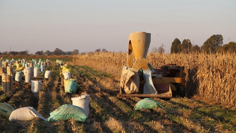 Landbouwbedrijf in Potchefstroom, Zuid-Afrika royalty-vrije stock fotografie