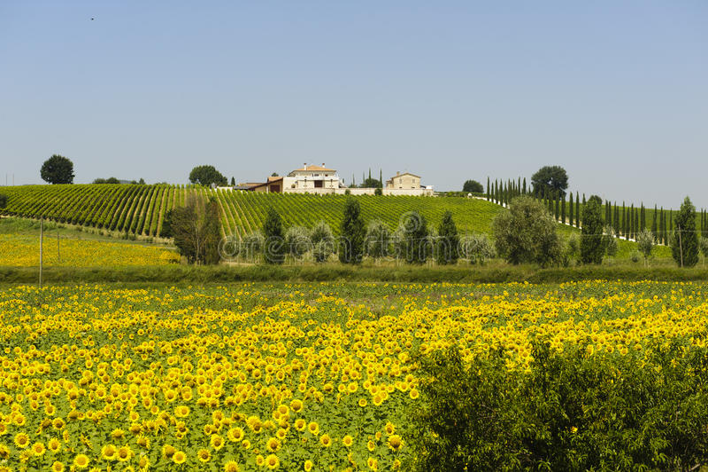 Landbouwbedrijf in Umbrië stock foto's