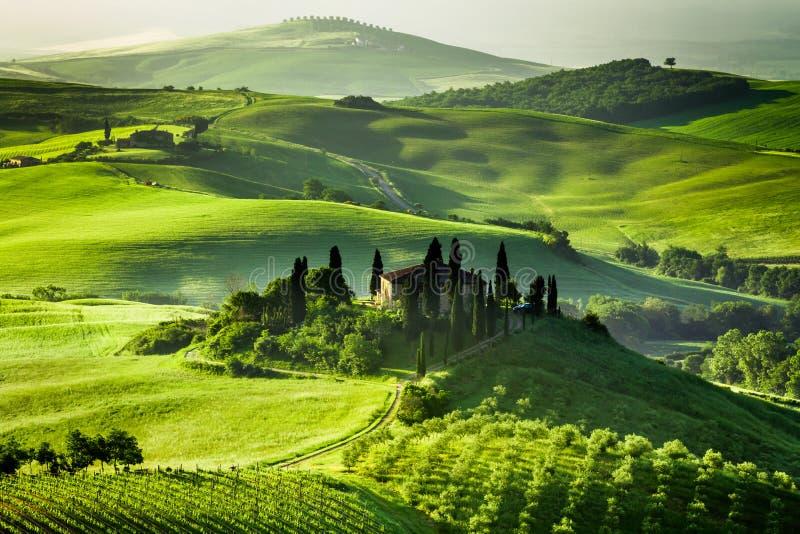Landbouwbedrijf van olijfgaarden en wijngaarden stock afbeelding