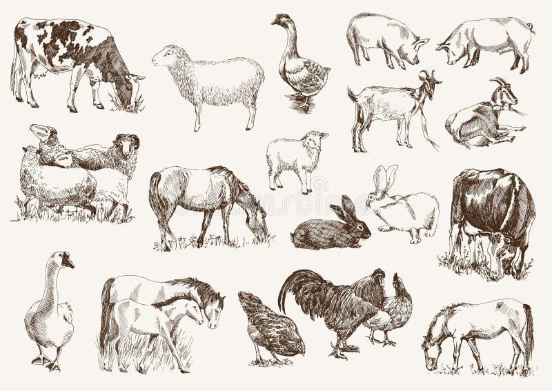 Landbouwbedrijfdieren vector illustratie