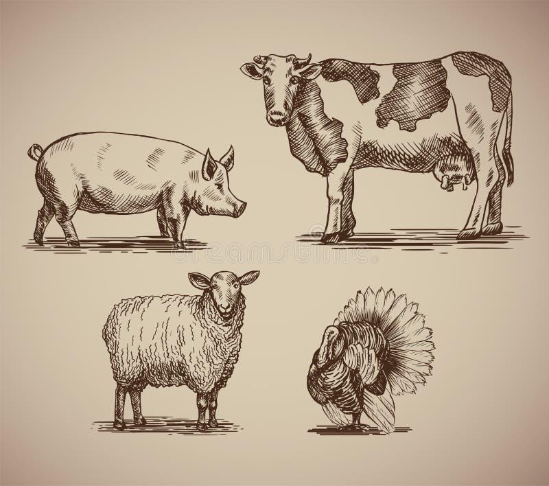Landbouwbedrijfdieren in de compilatie van de schetsstijl royalty-vrije stock foto