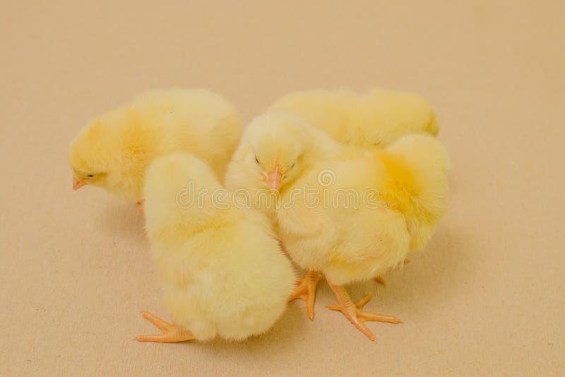 Landbouwbedrijfdieren - Gevogelte - Grills royalty-vrije stock fotografie