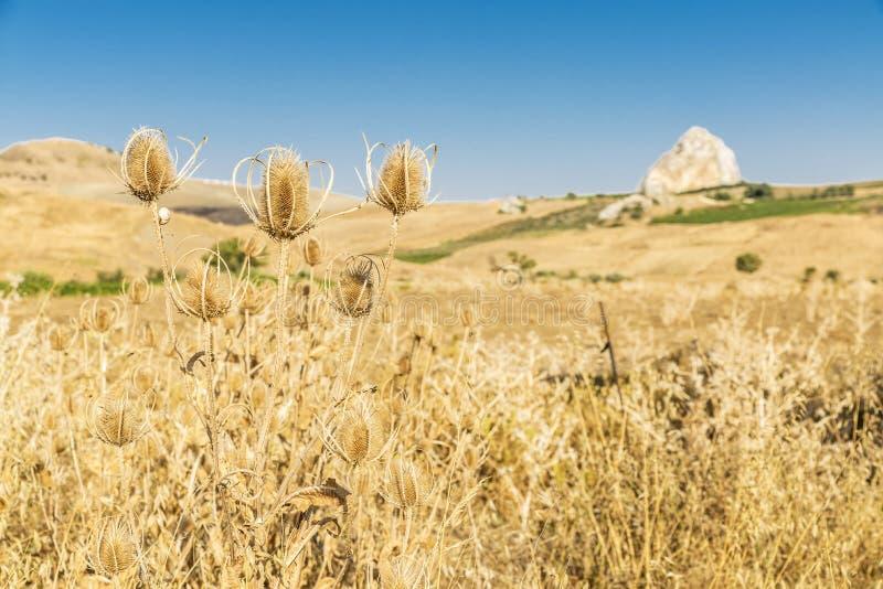 Landbouwbedrijfgebieden dichtbij Corleone in Sicilië, Italië royalty-vrije stock foto