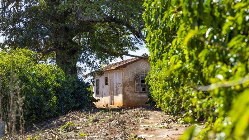 Landbouwbedrijfhuis, de boom van de koffieaanplanting en het eenvoudige landbouwbedrijfleven stock foto's