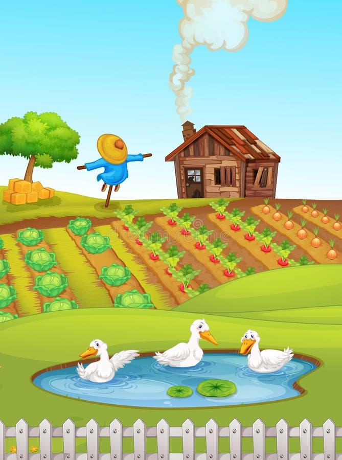Landbouwbedrijfscène met eenden vector illustratie