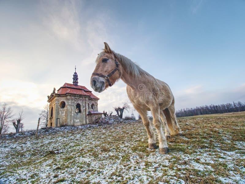 Landbouwbedrijfweide voor paarden bij kerk of kapel royalty-vrije stock afbeelding