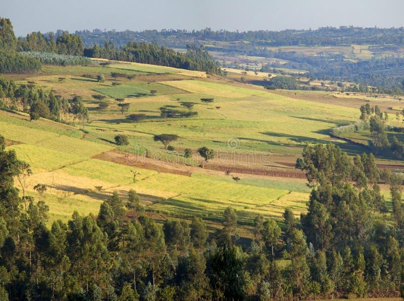 Landbouwbedrijven van Ethiopië royalty-vrije stock fotografie