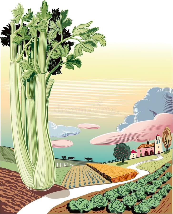 Landbouwdielandschap met selderie wordt geplant royalty-vrije illustratie